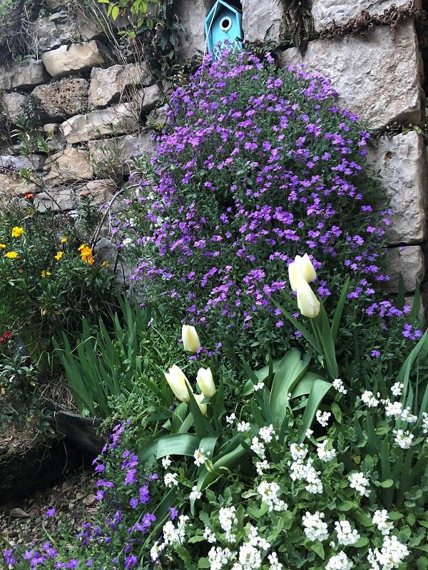 Fleurs EL Souyri