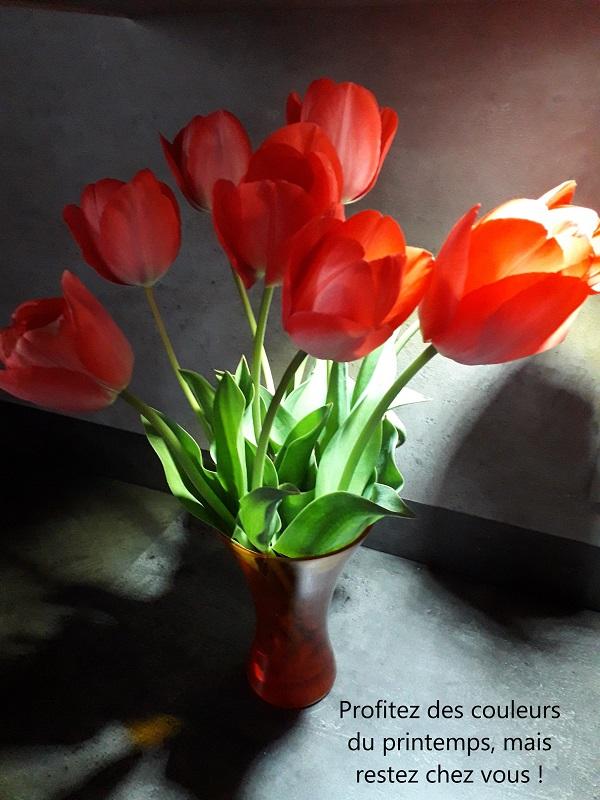 Tulipes BB Le Crès