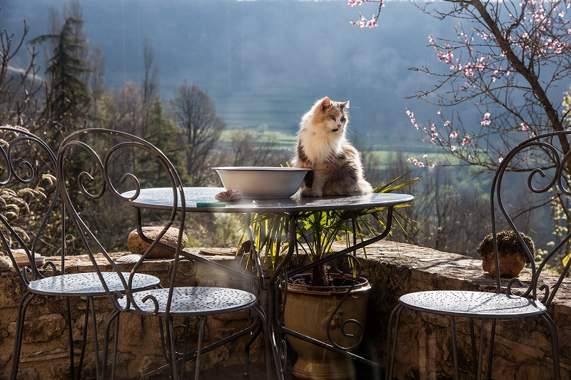 Chat sur la terrasse MS Fontcoussergues